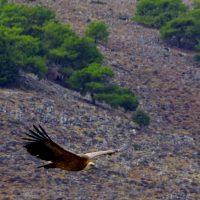 Seekajakreise Kreta alt