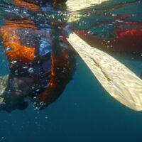 Rolle mit Blick zur Unterwasserwelt Mexiko Baja California Sea Cortez